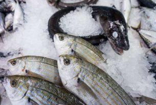 Wynajem pracowników na produkcje przetwórstwa ryb