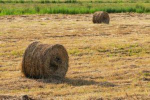 Zatrudnianie pracowników sezonowych w gospodarstwie rolnym